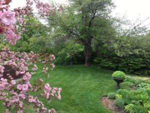 Garden in Spring
