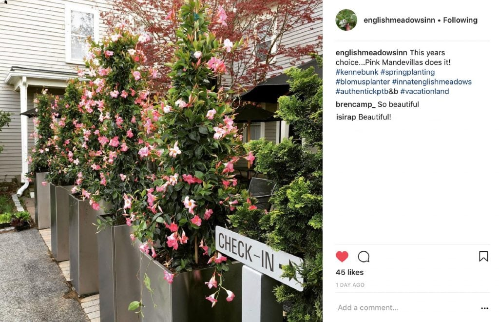 Instagram Image of blooming plants along the way to the inn - comments by two people saying this is beautiful