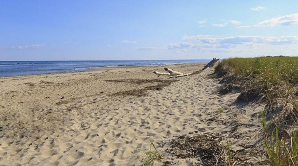Parsons Beach Driftwood