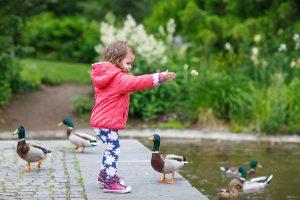 Little girl feeding ducks at Snug Harbor Farm
